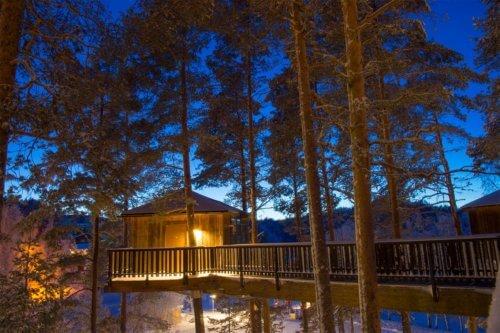 Fågelnäste - hotellrum i träd