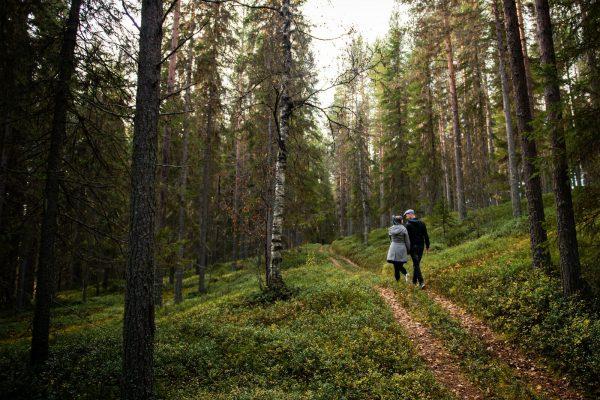 Granö Beckasin Promenad Skog