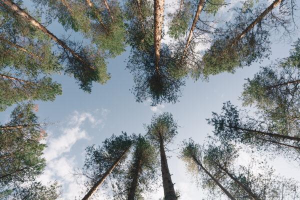 skogsbad