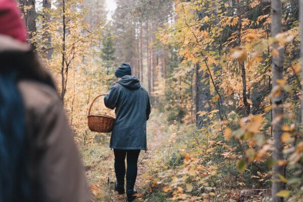 Plocka svamp på hösten